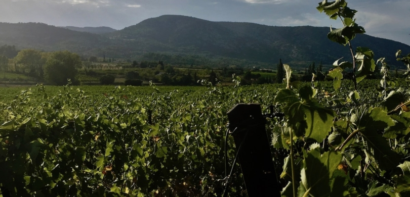 Wine from Provence