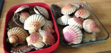 Fresh Scallops - Photo