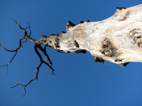 7 arbre fossilisÇ