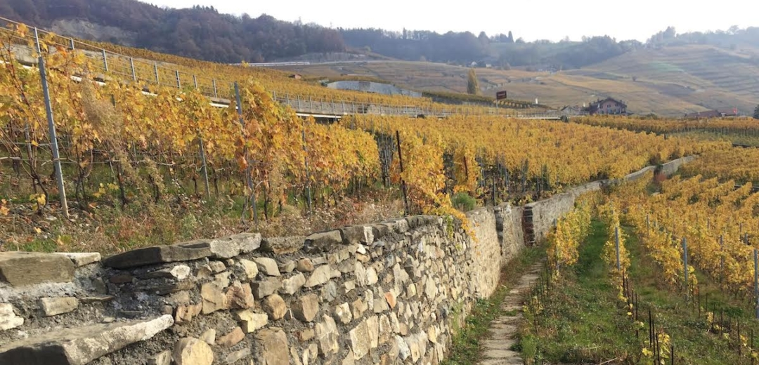 lavaux switzerland wine