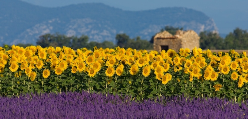 french provence vocabulary