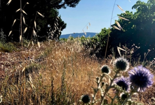 learn french provence