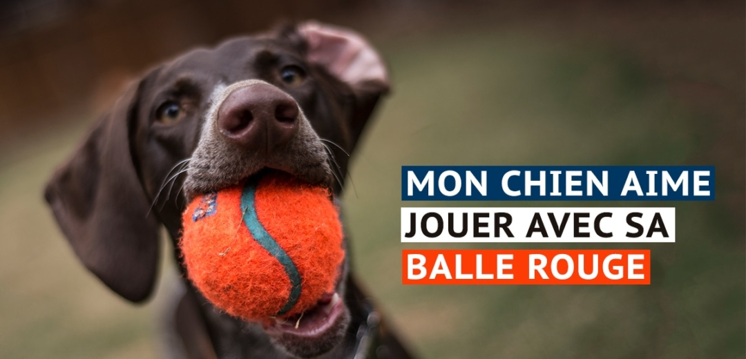 Dog with Ball and French Text