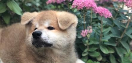puppy french vocabulary