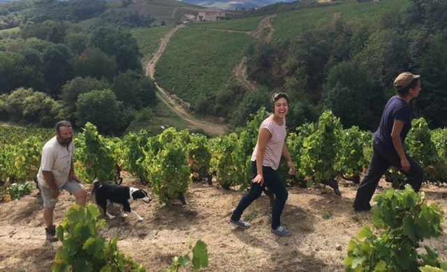 interview of a french wine harvester