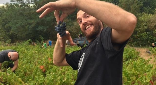 wine harvest in france