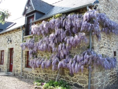 french flowering trees vocabulary
