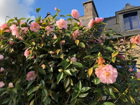 french flowering trees vocabulary 5