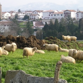 🐑 Le Village de Sare – French Story + Translation