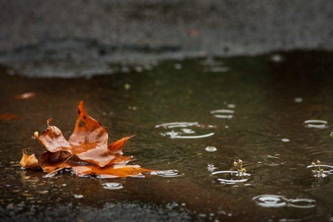 Dead Fall leaf