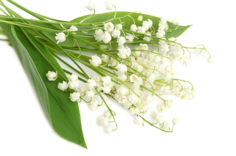 may in france traditions holiday lily of the valley