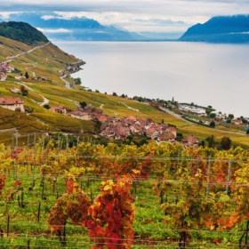 Lavaux Vineyards in Switzerland – French Practice