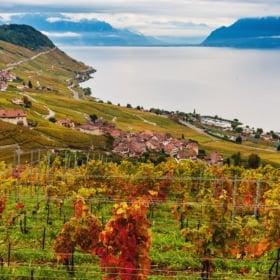 🍷 Lavaux Vineyards in Switzerland – French Story + Translation