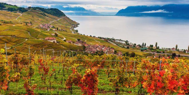 Lavaux swiss vineyard wine french speaking