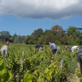 🍇🍷 Wine Harvest in Beaujolais – French Story + Translation