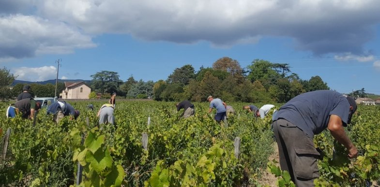 Wine Harvest French Vocabulary