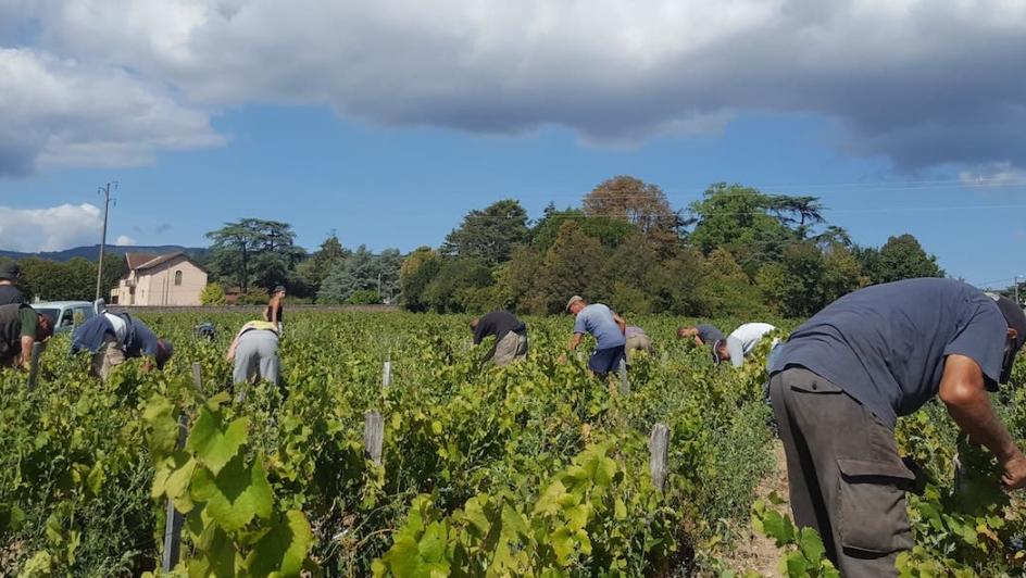 Wine Harvest French Vocabulary