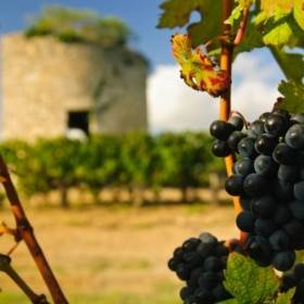 learn french immersion france bordeaux vineyard
