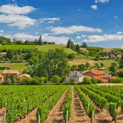 image: Marion - French Immersion Homestay in the Beaujolais Region