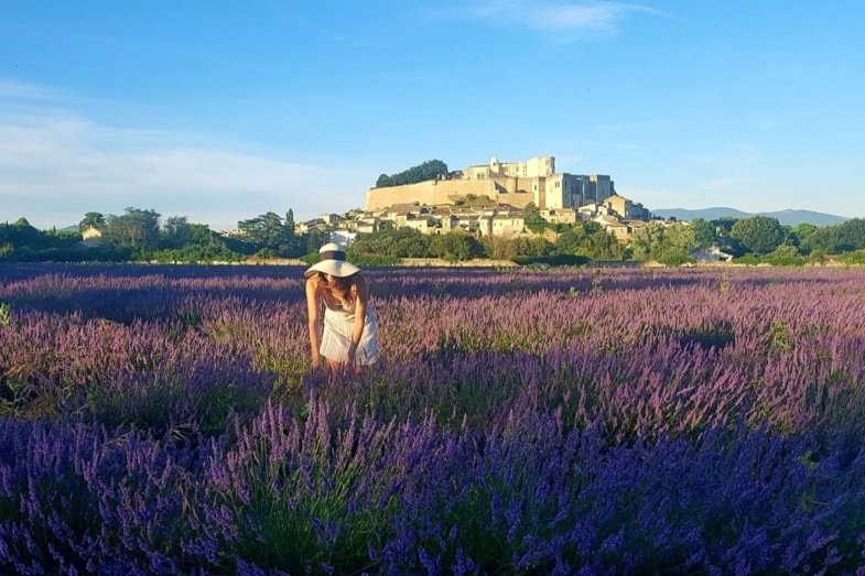 provence - avignon french immersion homestay