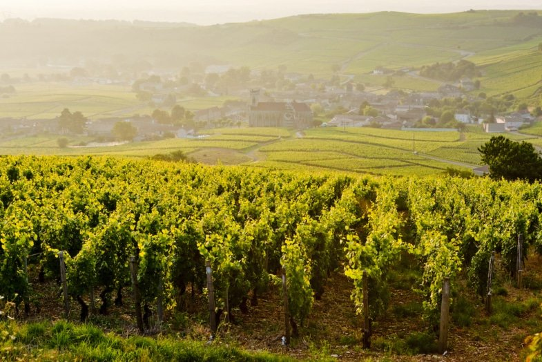 residential french immersion at teacher's beaujolais france