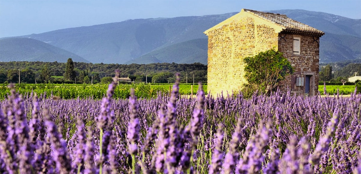 image: Virginie - French immersion homestay teacher in Provence