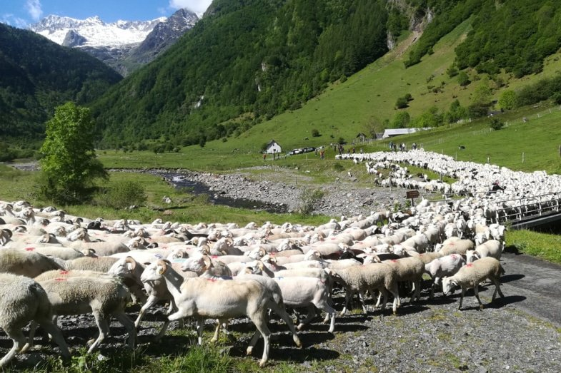french herding vocabulary