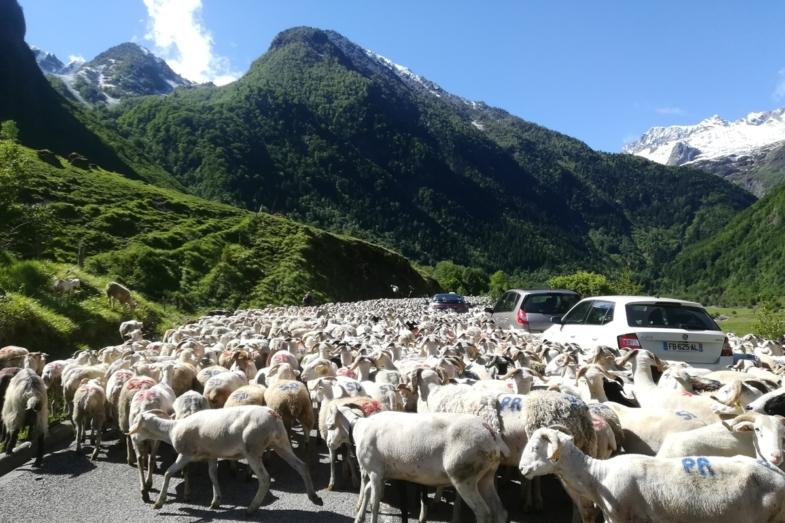 french herding vocabulary