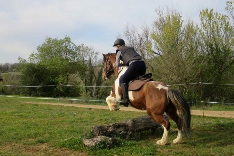 Trec Horseback riding france 1