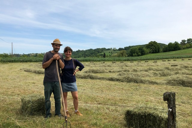 Harvest in France – French Story + Translation