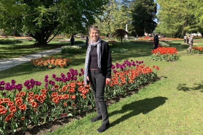 tulips in Switzerland free french story