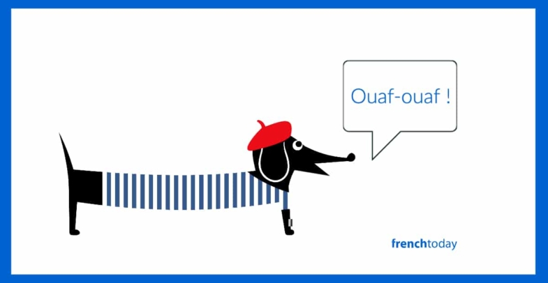French dog saying ouaf-ouaf in French