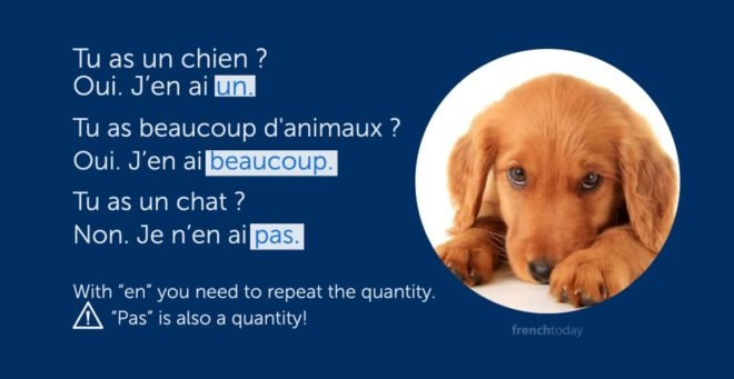 rules of en in french and cute dog