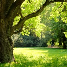 🌳 French Tree Vocabulary