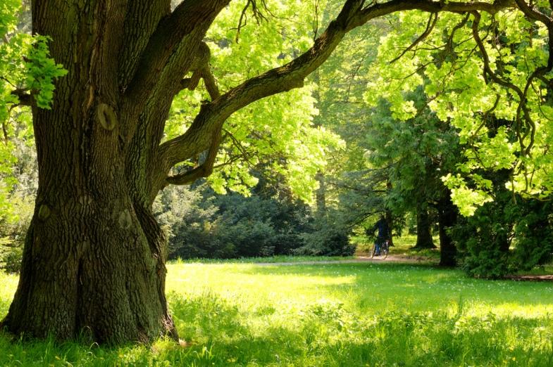 beautiful tree in france
